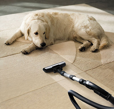 How Pet Owners Take Care of their Carpets